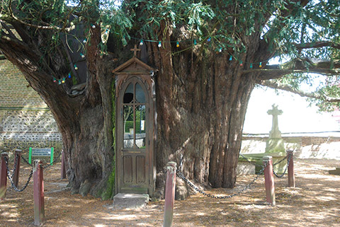 La-Haye-du-Routot_chapel-yew-trunk-WimPeeters_2014-04-09