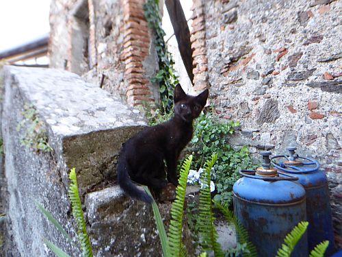 blog-aspromonte-gatto