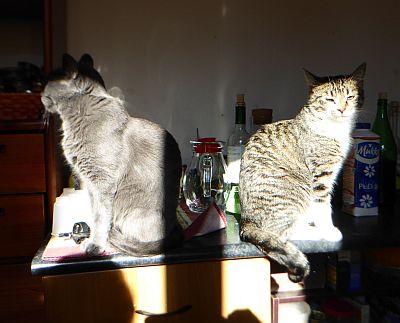 blog-gatti