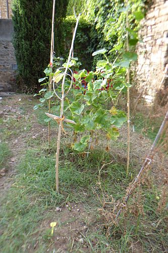 blog-giardino-croce