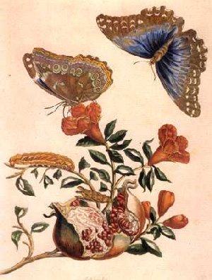 Papillon übersetzung